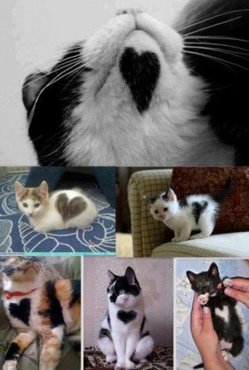 Cat Heart Shaped Fur Patterns