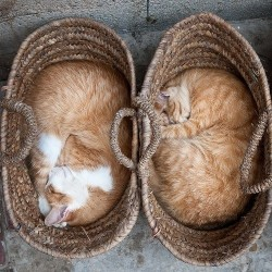 Cat Symmetry and Harmony