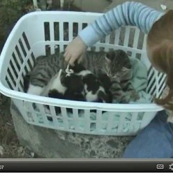 Girl and Boy Admire Cat and Kittens