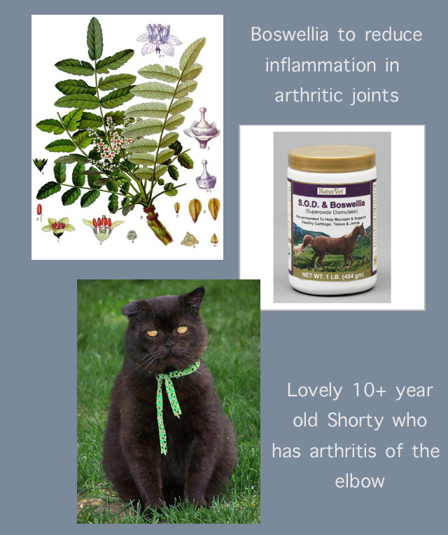 Home Treatment for Cat Arthritis