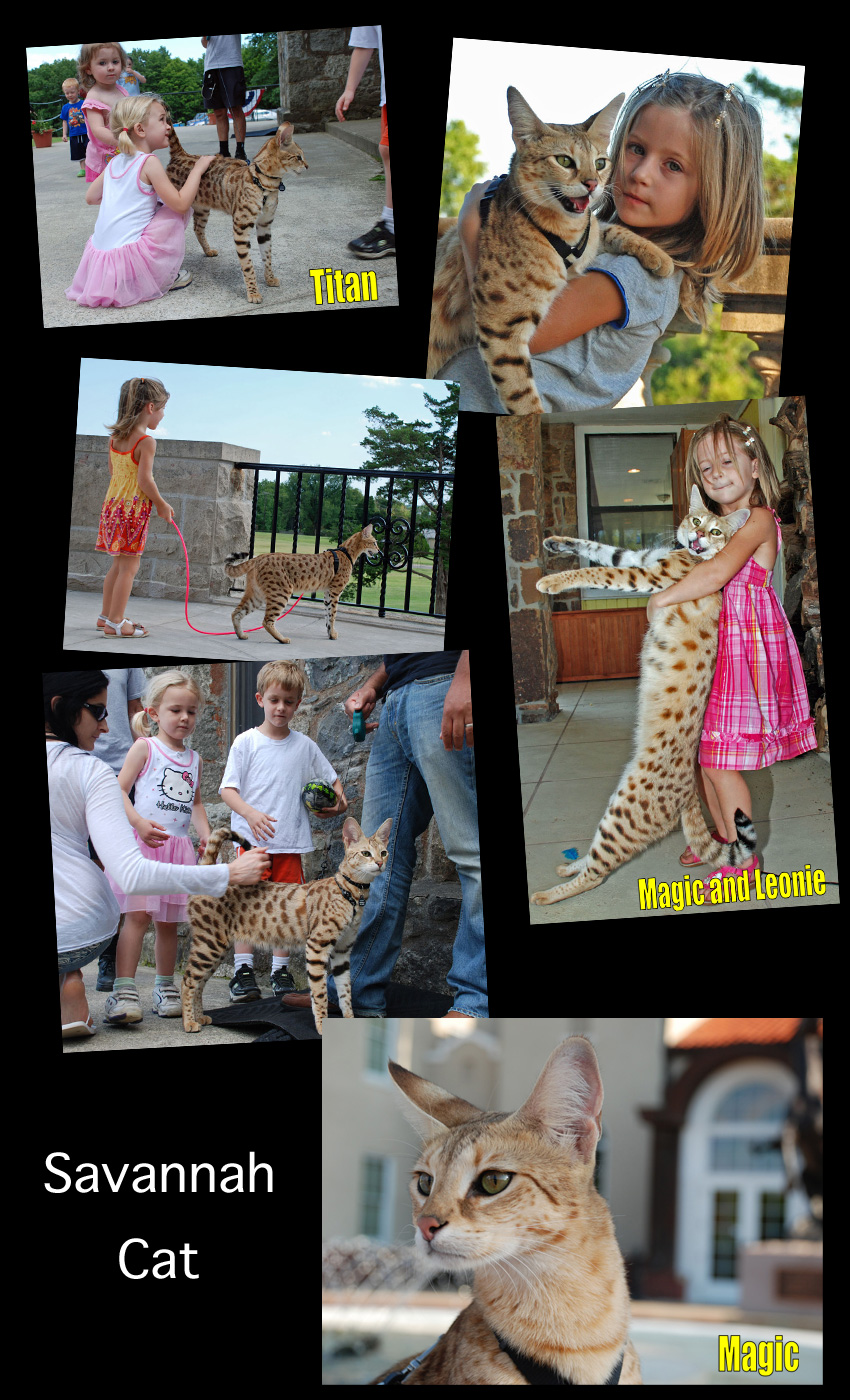 Savannah Cat Facts For Kids