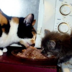 Lola and Furbys 1st meal