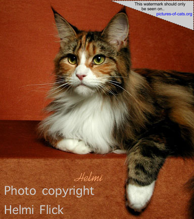 essay on declawing cats Declawing and science this summary presents the main arguments against a legal ban on declawing (of cats and other animals), and the documented.