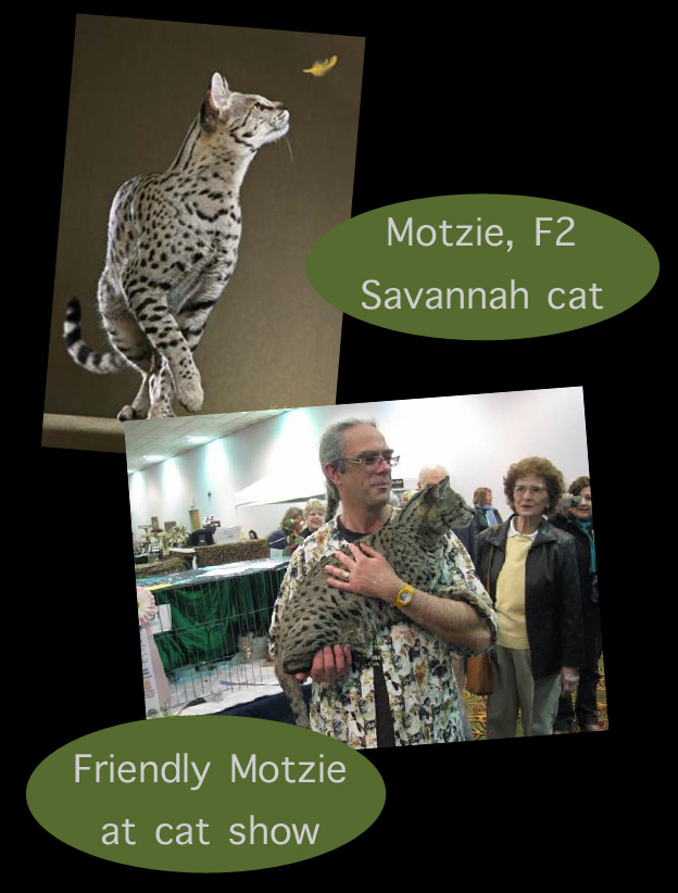 Savannah Cat First Choice For Obamas