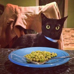 Black cat and a plate of peas