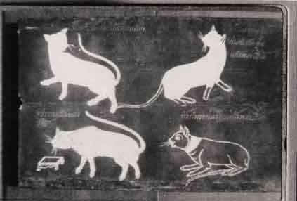 Cat Book Poems Siamese Cat