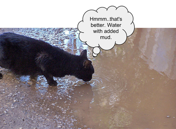 Cat Drinking From Muddy Pool