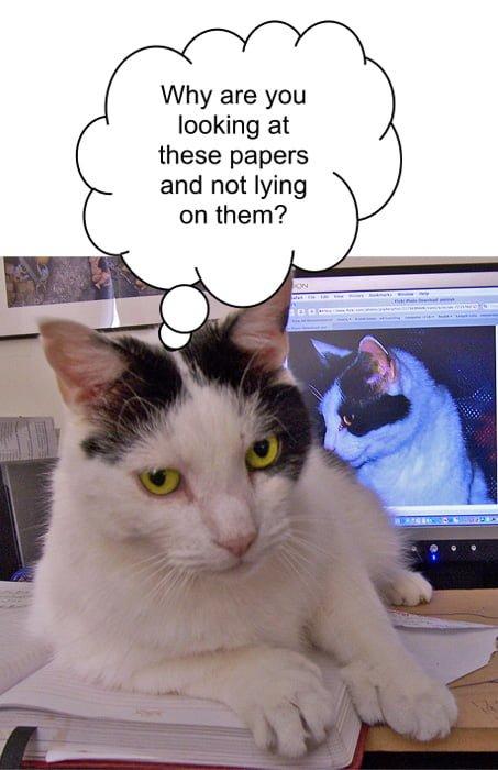 Cat Interruptions