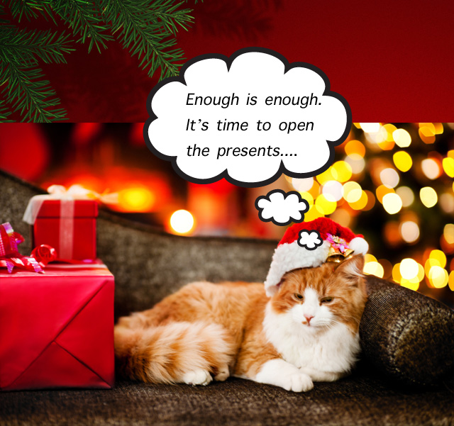 Buying your cat a present at Christmas