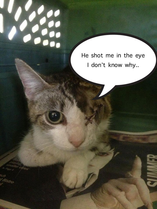 Cat Shot in the Eye