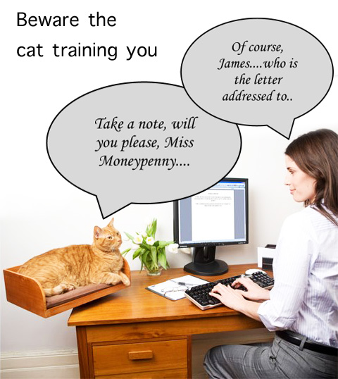 Cat Training Person