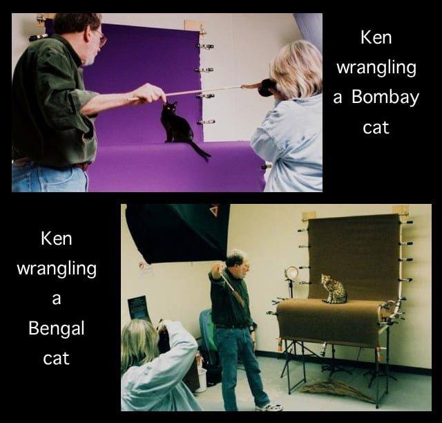 Cat Wrangling