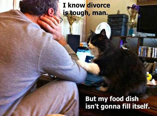 Cats And Divorce