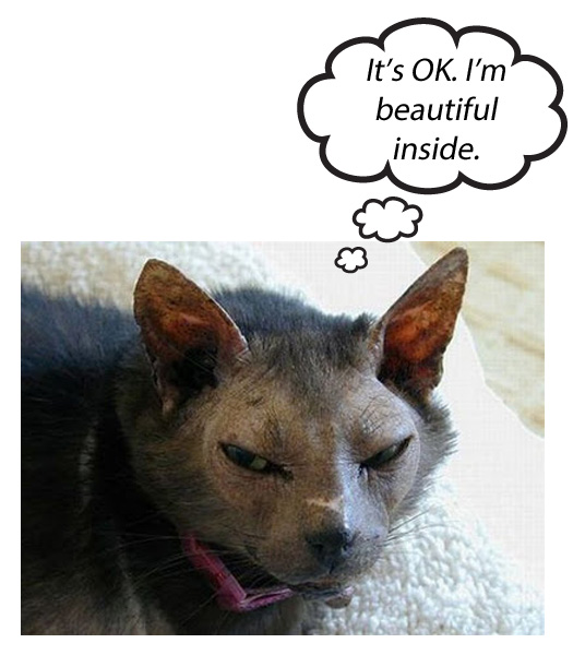 A cat's inner beauty