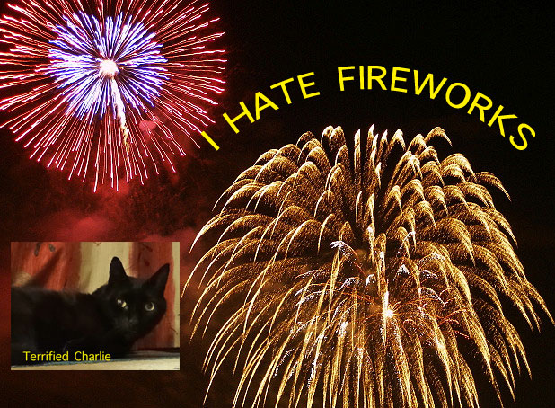 Fireworks Terrify Cats