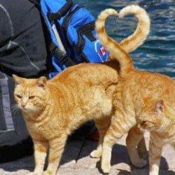 ginger-tabblies-make-heart-shape