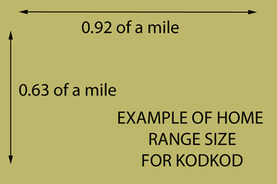 Home range size for kodkod in a part of Chile
