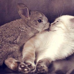 rabbit-and-cat-are-friends