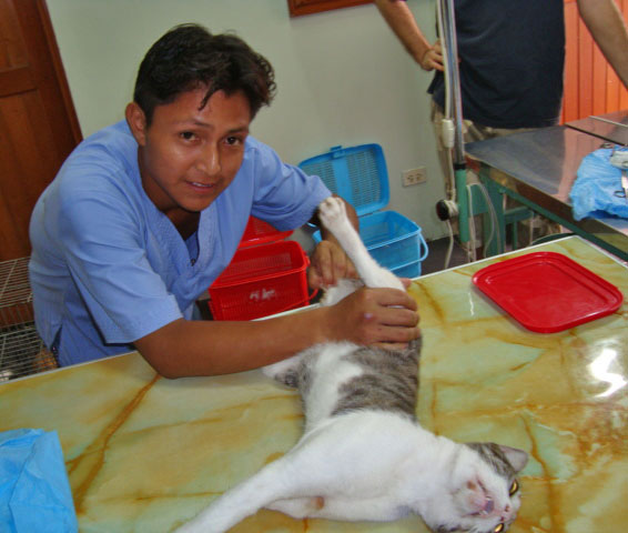 Spay and neuter in Peru