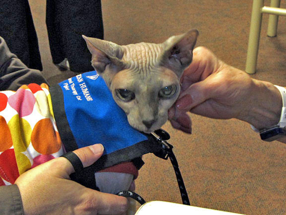Sphynx Therapy Cat Piglet