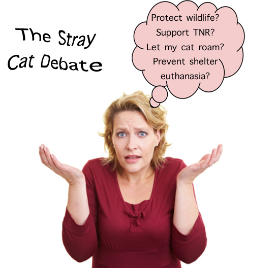 Stray Cat Debate