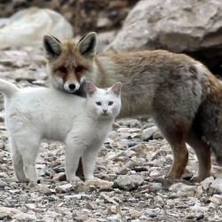 Cats make friends with different species of animal including humans.