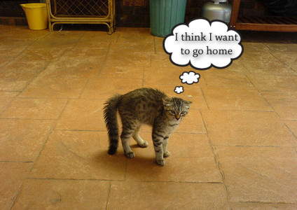New cat behavior problems