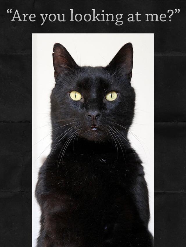 Assertive Cat