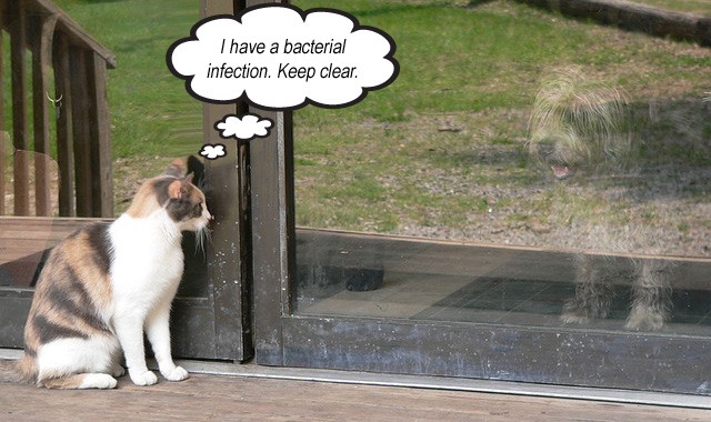 Bacterial infection in dogs contagious to humans