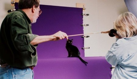 Helmi Flick photographing a Bombay cat at a cat show