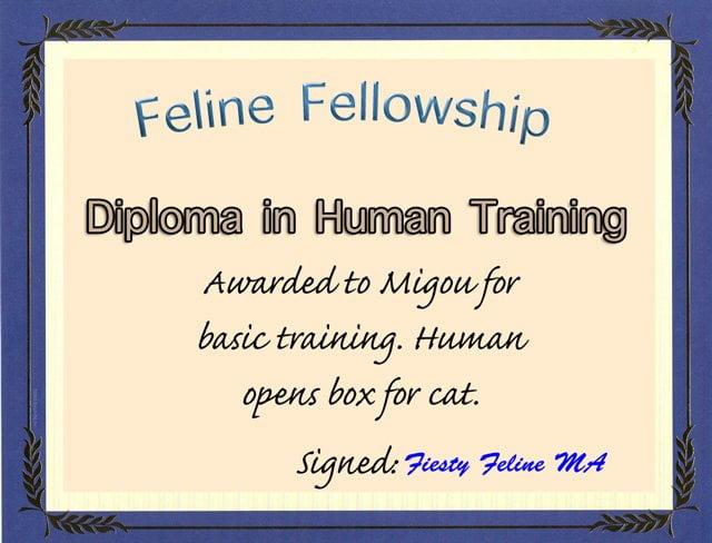 Cat Certificate
