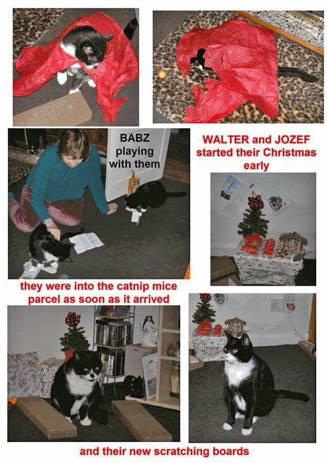 Do Your Cats Like Christmas