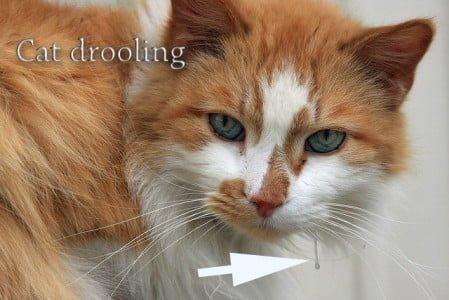 catnip mice for cats