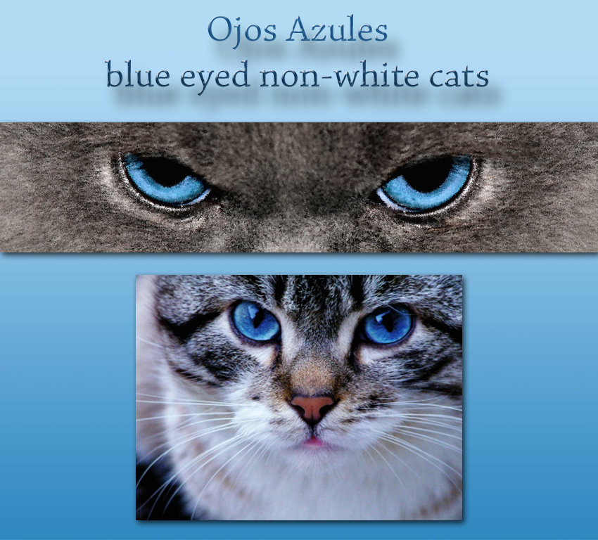 Ojoas Azules Cat Facts For Kids.