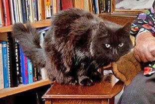 Patrick moore's cat Ptolemy