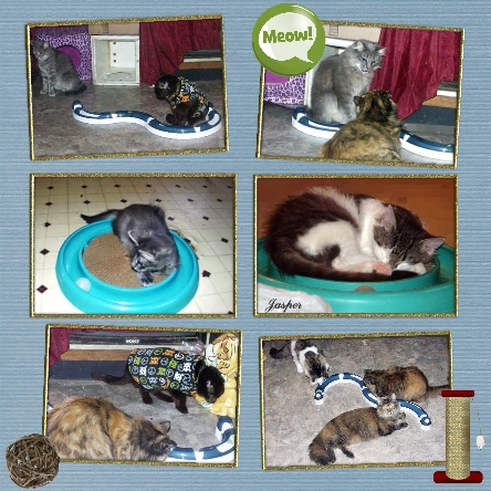 Cat Toy Review. Collage by Elisa