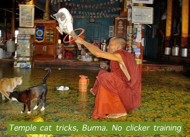Training Cats