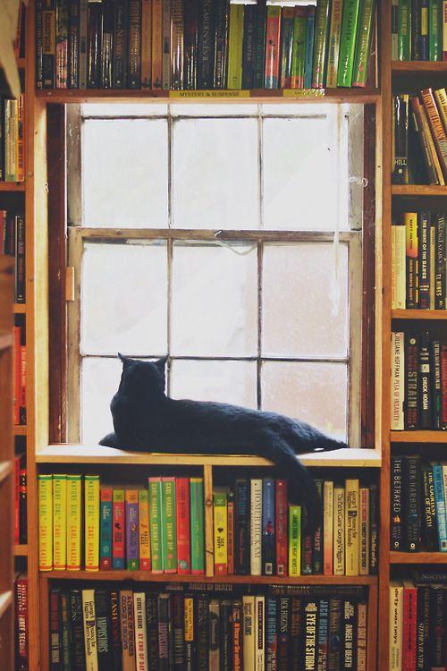 Book shop cat