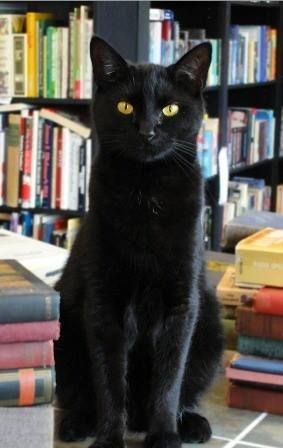 Book shop cat