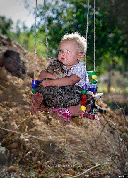 Cat and boy on a swing