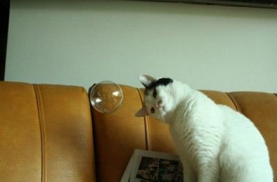 Cat and a Bubble