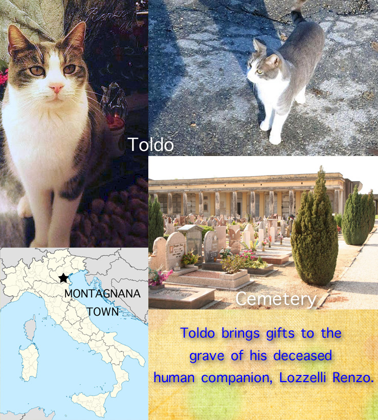 Toldo a cat who brought gifts to grave of deceased human companion