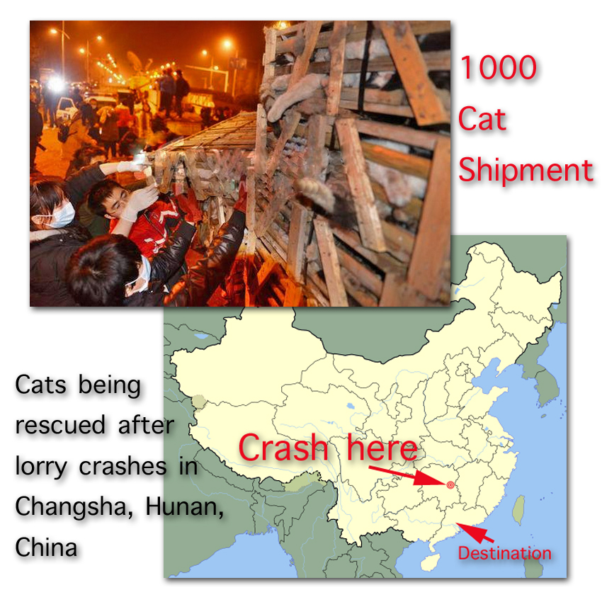Cat meat shipment cats rescued