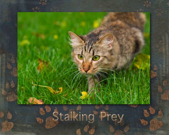 Cat Stalking Prey