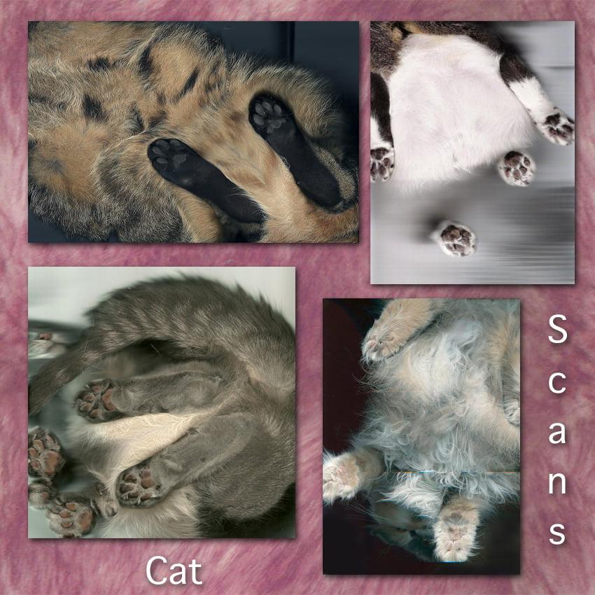 Cat Scans