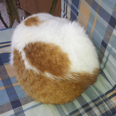 headless cat picture