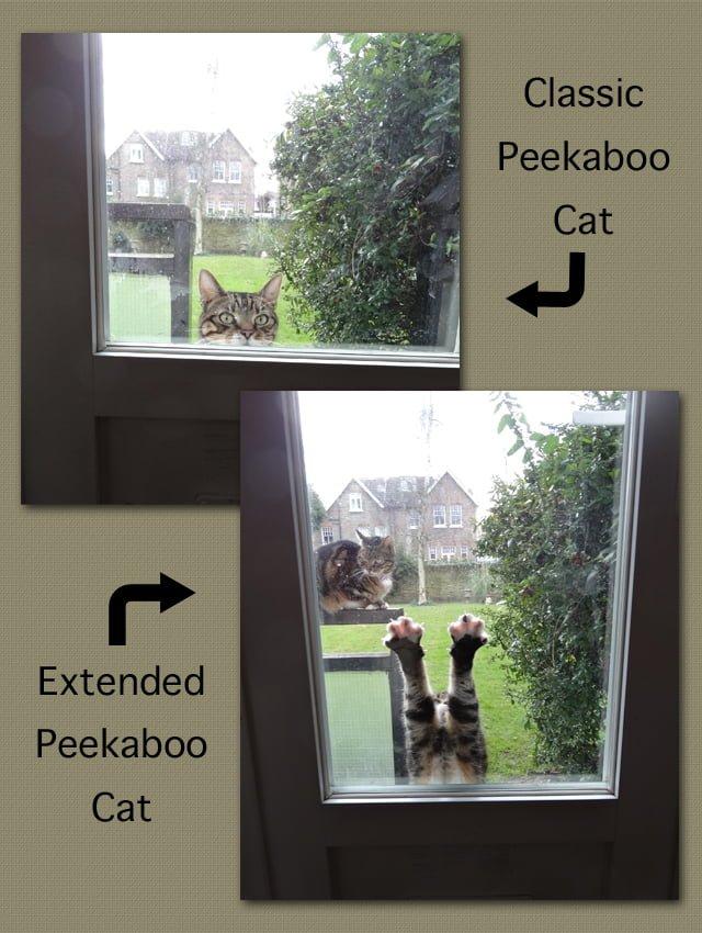 Peekaboo cat. Photos by Michael.
