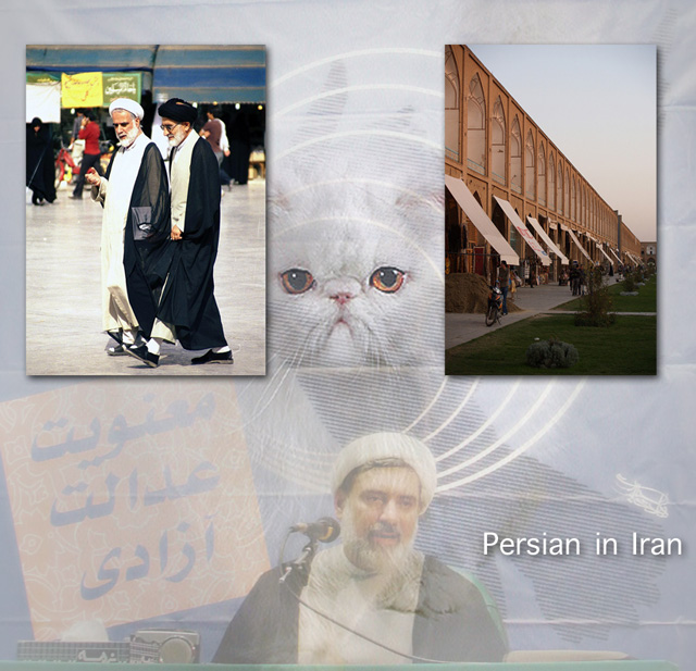 Cats in Iran