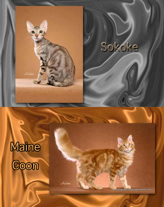Tabby cat name