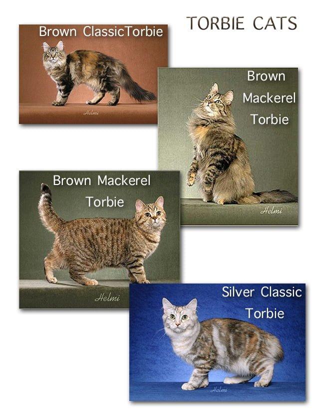 Torbie Cats